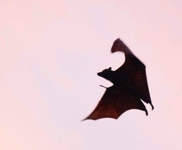 DMP-Blues,-Nudge-Marketing,-data-viz-et-Dracula